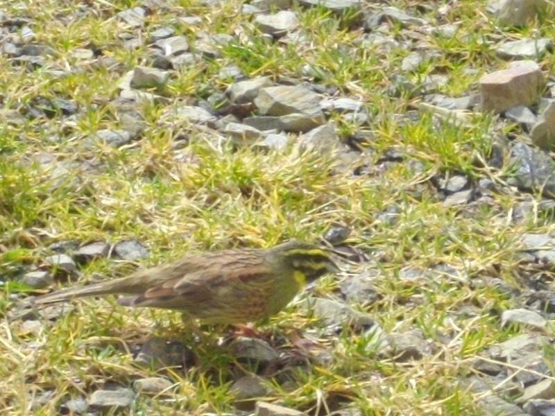 quel est cet oiseau? Oiseau11