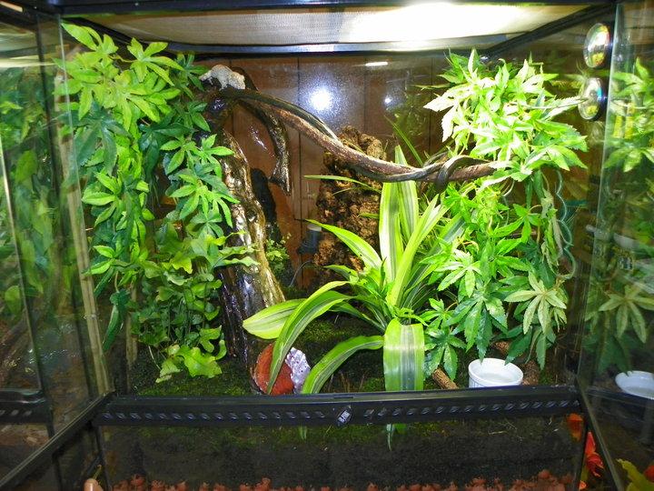 terrariums plantés Terra_10