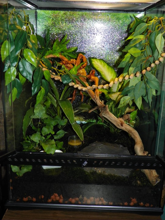 terrariums plantés Terrar13