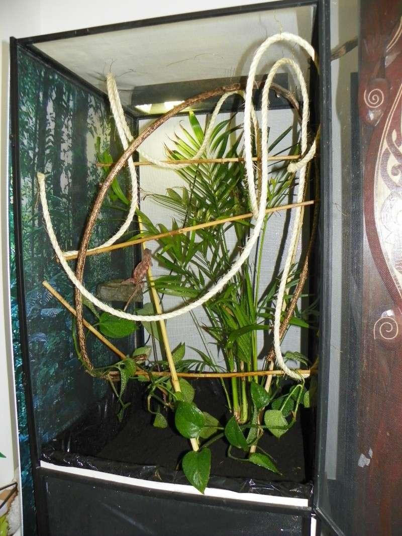 terrarium caméléon panthère Viv_fe10