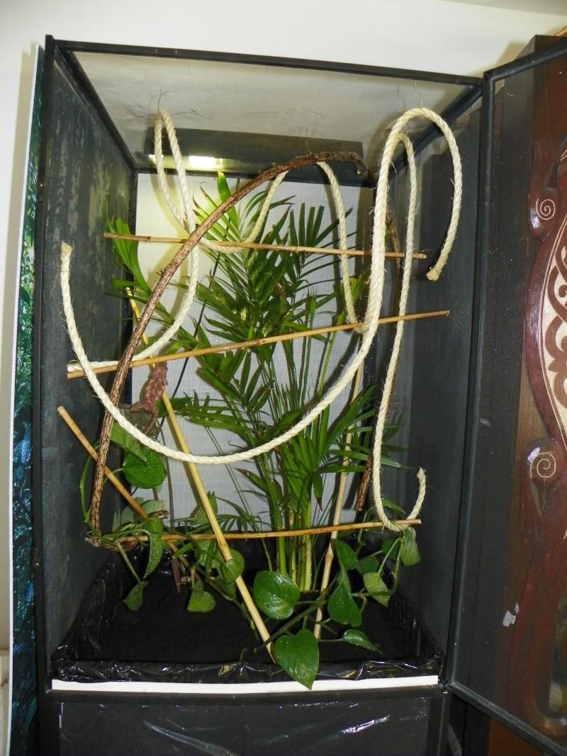 terrarium caméléon panthère Viv_fe11