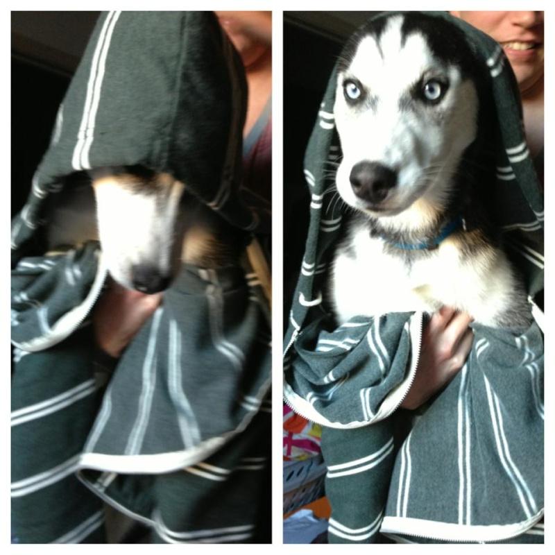 First Husky! Kiara  56210710