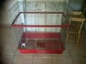 Vend cage pour rats sur Nantes (44) (vendue) Img-2012