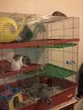 Vend cage pour rats sur Nantes (44) (vendue) Photo012
