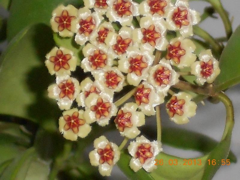 Blüten 2013 Dscn0512