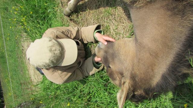 CONCOURS PHOTO : Les chevaux paresseux... - Page 2 Img_1013