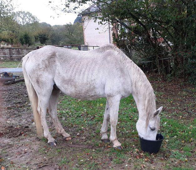 FOREVER (notre mascotte) - Connemara X SF né en 1994 - adopté en novembre 2009 par sophie-france - Page 3 20201024