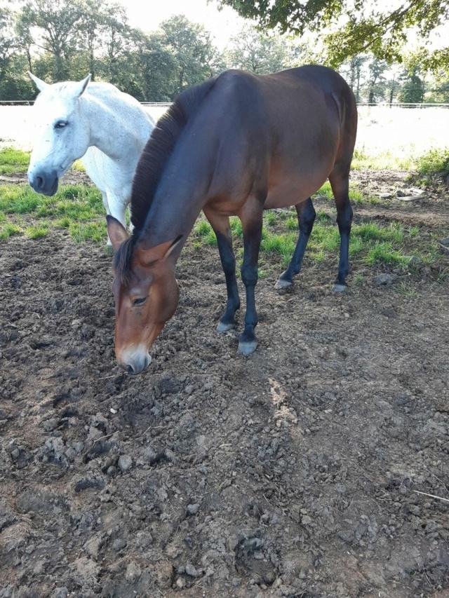 FALBALA - ONC mule née en 2015 - adoptée en juillet 2016 par Thierry - Page 3 20210732