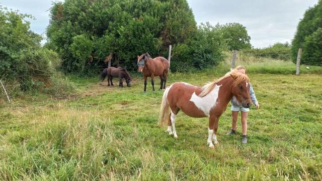 KANSAS - ONC poney typé Shetland né en 1998 - adopté en octobre 2014 par Amandine 23813711