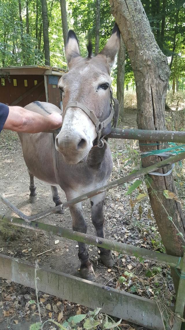 OSCAR - âne né en 2003 & SAMARA - TF née en 2006 (DCD janvier 2019) - adoptés en mars 2012 par Maxime 332