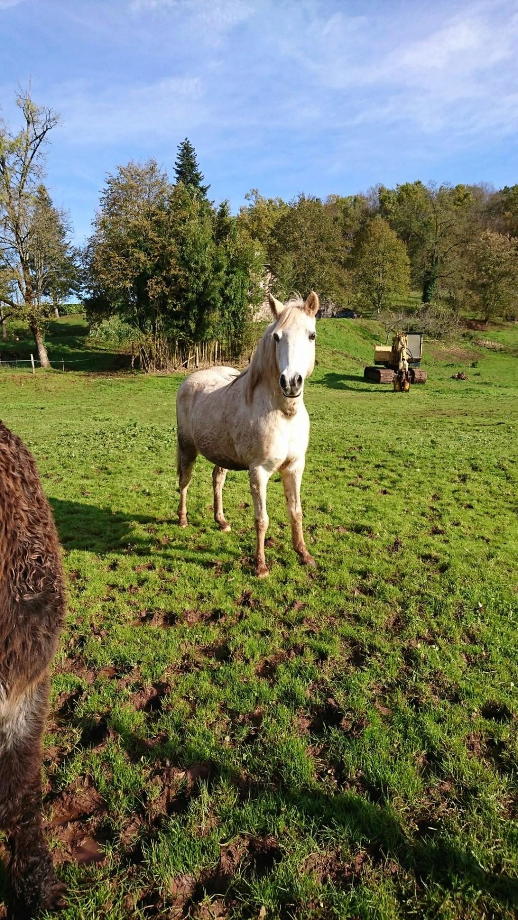 ALONA dite LOUNA - ONC Poney née en 2010 - adoptée en novembre 2013 par Brigitte - Page 3 Alona10