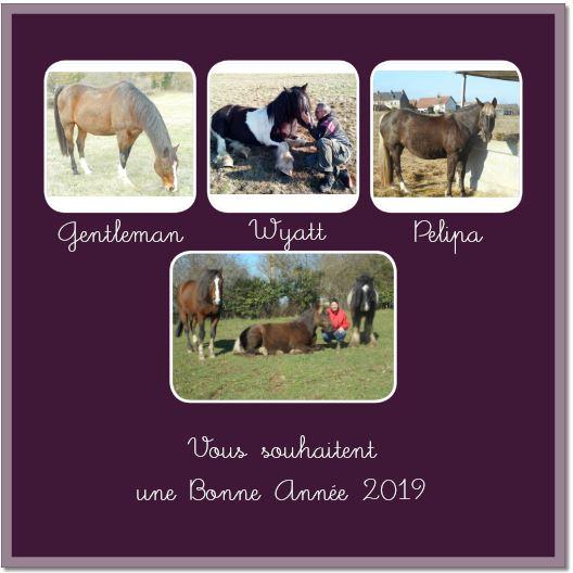 PELIPA - ONC Poney née en 2007 - adoptée en septembre 2014 par Ceed - Page 11 Ba211