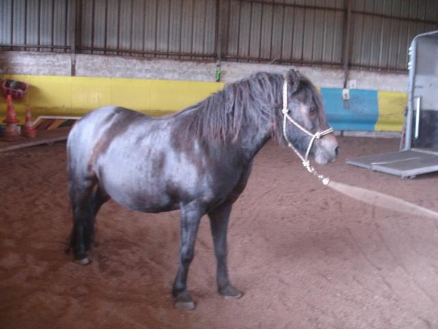 PRUNELLE - ONC poney typée shetland présumée née en 2000 - adoptée en août 2013 par Céline - Page 2 Dsc02220