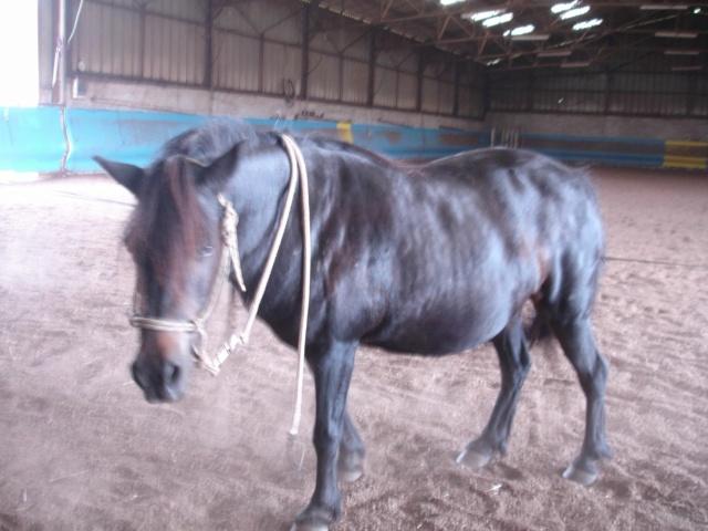 PRUNELLE - ONC poney typée shetland présumée née en 2000 - adoptée en août 2013 par Céline - Page 2 Dsc02221