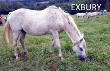 EXBURY