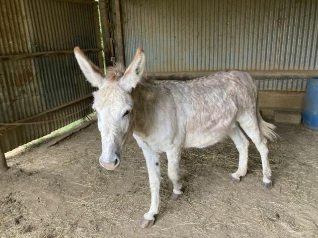 ZEBULON - ONC âne né en 2008 - adopté en octobre 2010 par Anita - Page 5 Img_1133