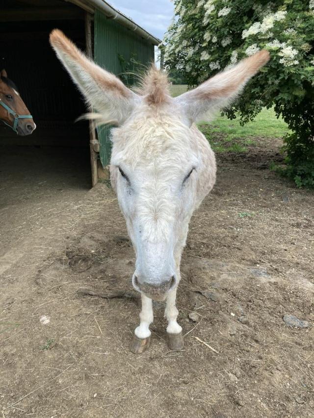 ZEBULON - ONC âne né en 2008 - adopté en octobre 2010 par Anita - Page 5 Img_1134