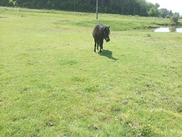 PRUNELLE - ONC poney typée shetland présumée née en 2000 - adoptée en août 2013 par Céline - Page 2 Img_2334