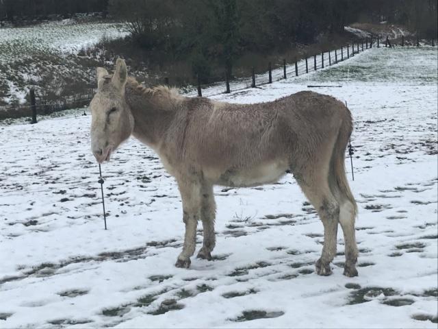 POTIRON - ONC âne né en 2001 - adopté en juin 2020 par Valérie Potiro32