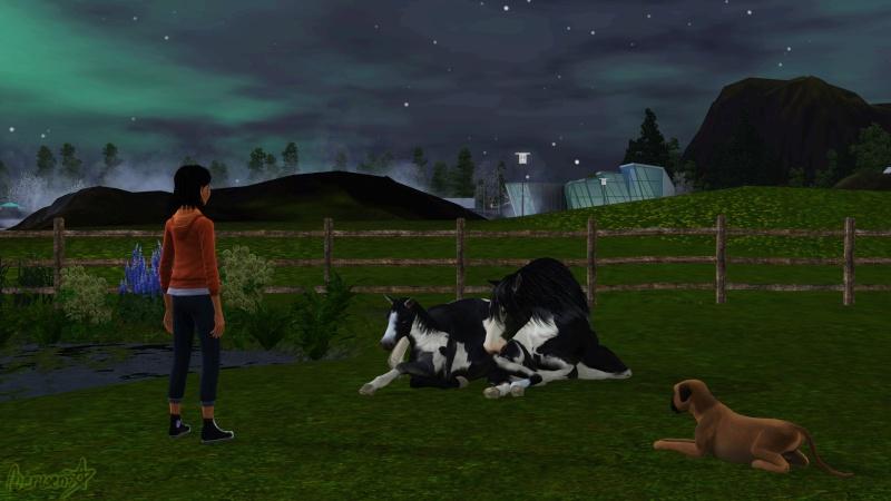 • Galerie d'animaux & de Sims de Nerwen • - Page 3 Concou10