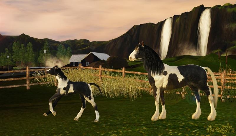 • Galerie d'animaux & de Sims de Nerwen • - Page 3 Concou12