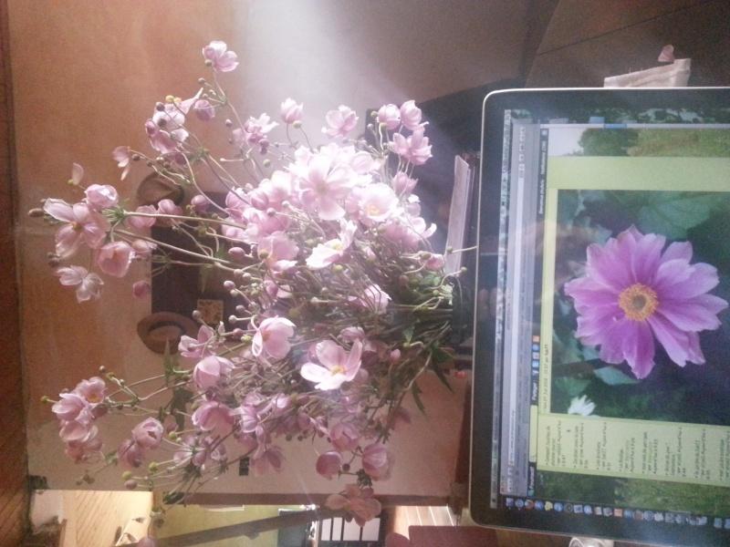 anemones du japon  - Page 2 20130911