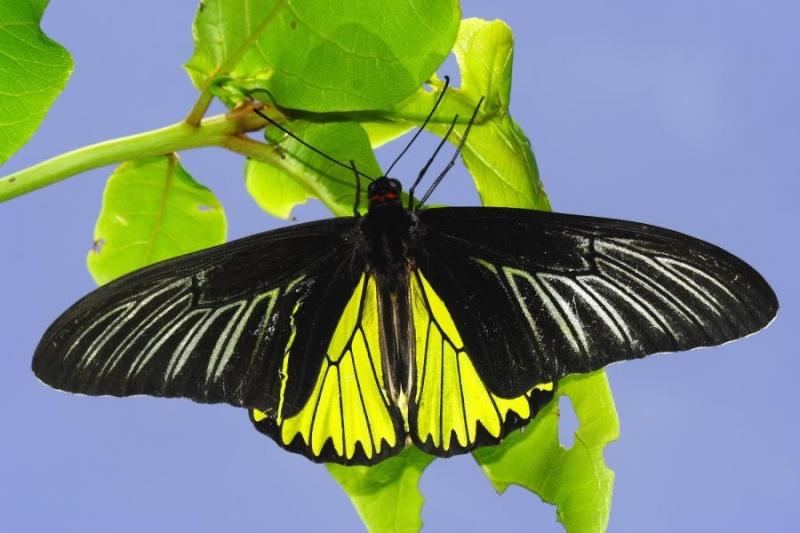 quel est ce papillon? 20090910