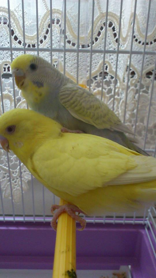 Des photos de mes 2 amours. :) 11757011