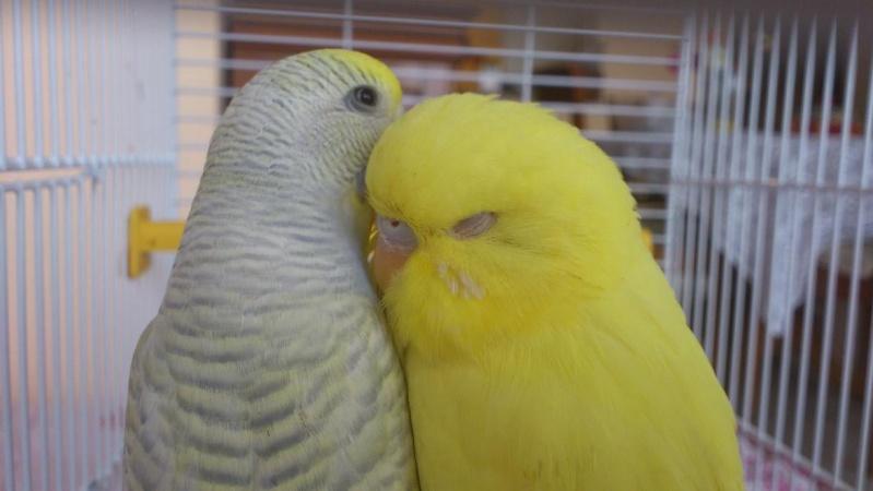 Des photos de mes 2 amours. :) 12687010