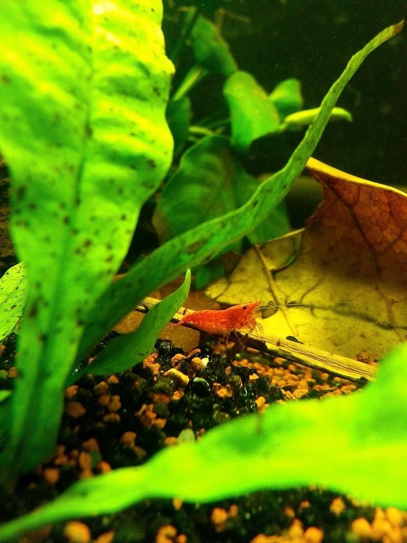 Le 30l de vmakao pour mes Red Cherry 20130911