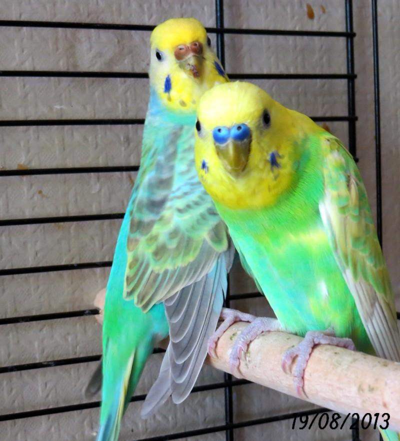 Mes deux couples  Img_0521