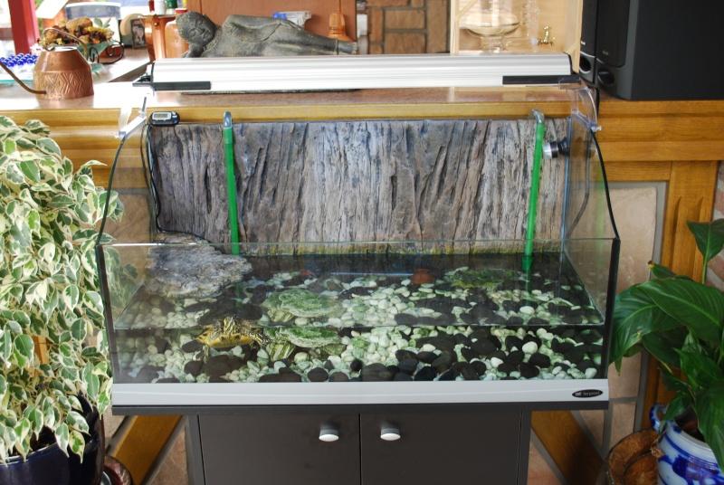 comment ce debaracer d'algues sur sa carapace et c est dangereux si la carapace se decolore Dsc_0013