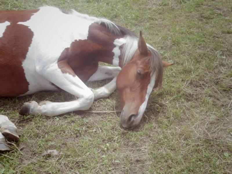 CONCOURS PHOTO : Les chevaux paresseux... Cncn10