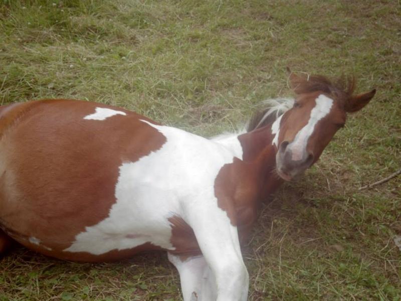 CONCOURS PHOTO : Les chevaux paresseux... Tatede10