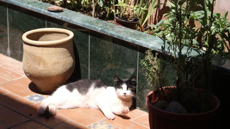 Bien le bonjour de Casablanca ^^ Dsc08210