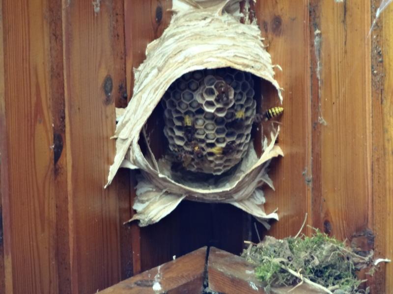 A qui ce nid d'hyménoptères? Dsc00414