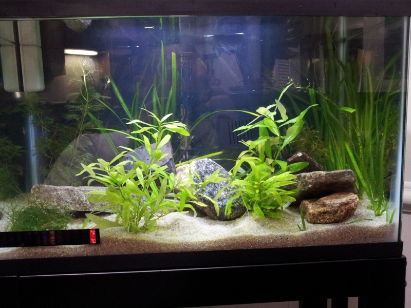 10 gallons planted aquarium with red cherry shrimps 2013-015