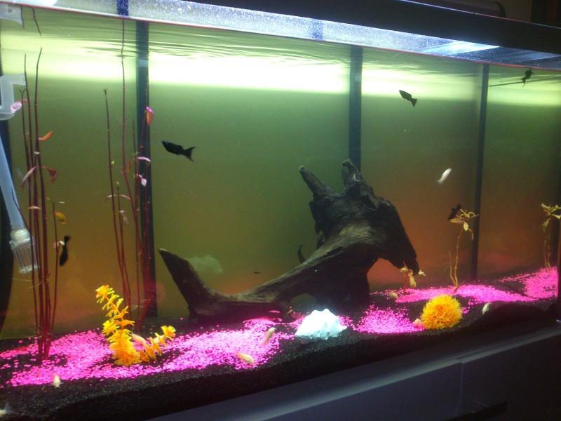 Evolution de mon aquarium Dsc_0210