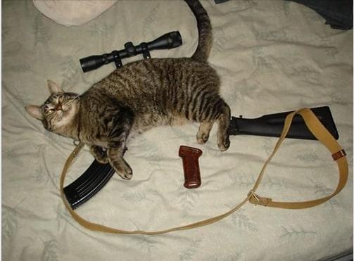 Identification armes trouvé à la SPA Chat11