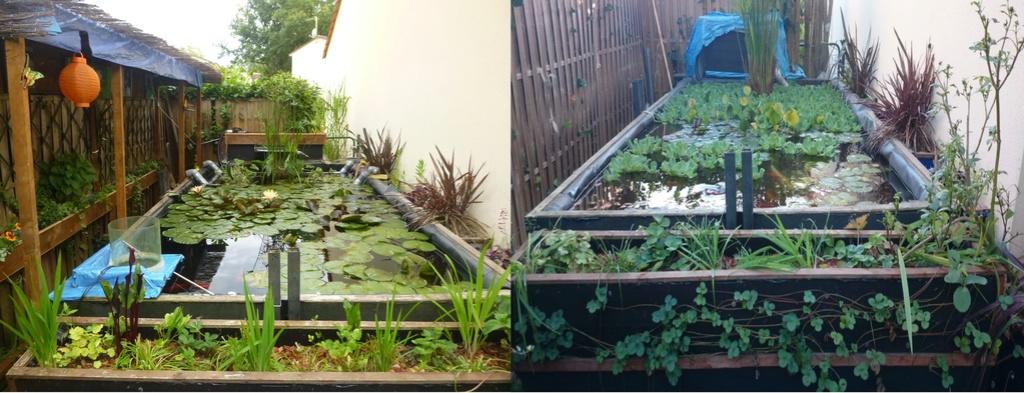 reamenagement de mon bassin de jardin - Page 10 111110