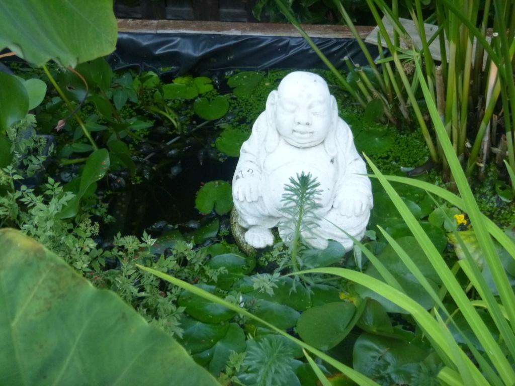 le bassin floral d'été de mes anodonte et moules naine - Page 16 315