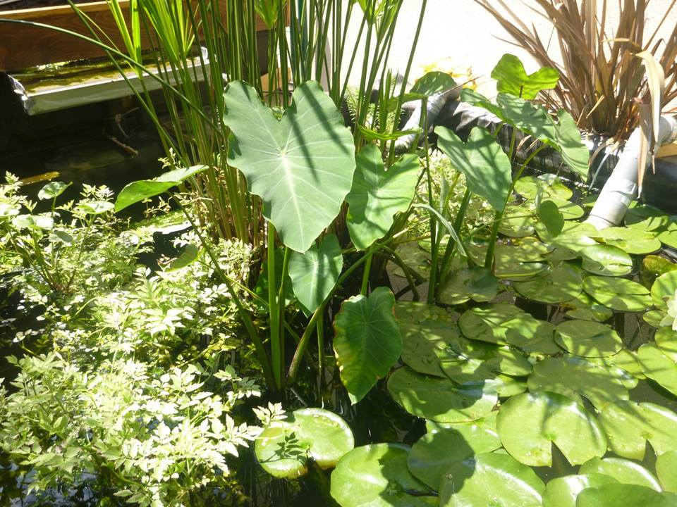bassin de jardin 8000L - Page 42 37237310