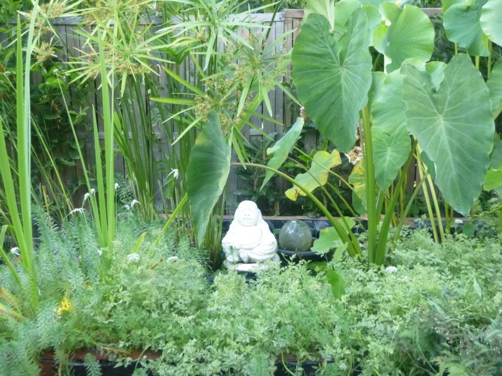 le bassin floral d'été de mes anodonte et moules naine - Page 16 411