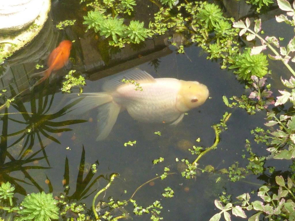 le bassin floral d'été de mes anodonte et moules naine - Page 16 58373710