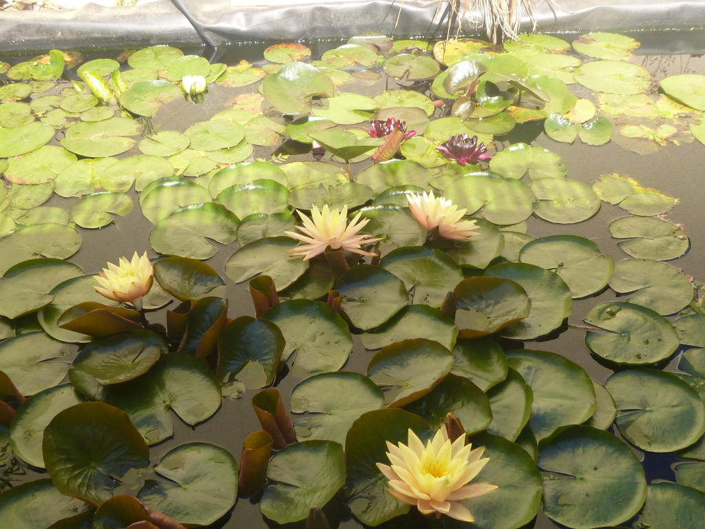 bassin de jardin 8000L - Page 42 P1000315