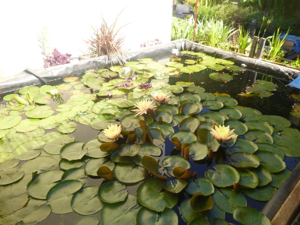 bassin de jardin 8000L - Page 42 P1000316