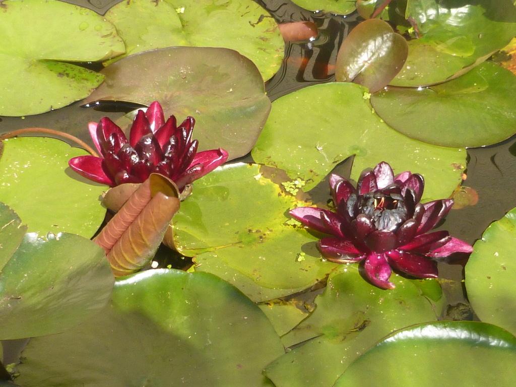 reamenagement de mon bassin de jardin - Page 10 P1000319
