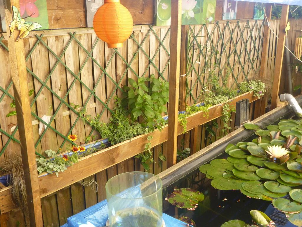 reamenagement de mon bassin de jardin - Page 10 P1000320