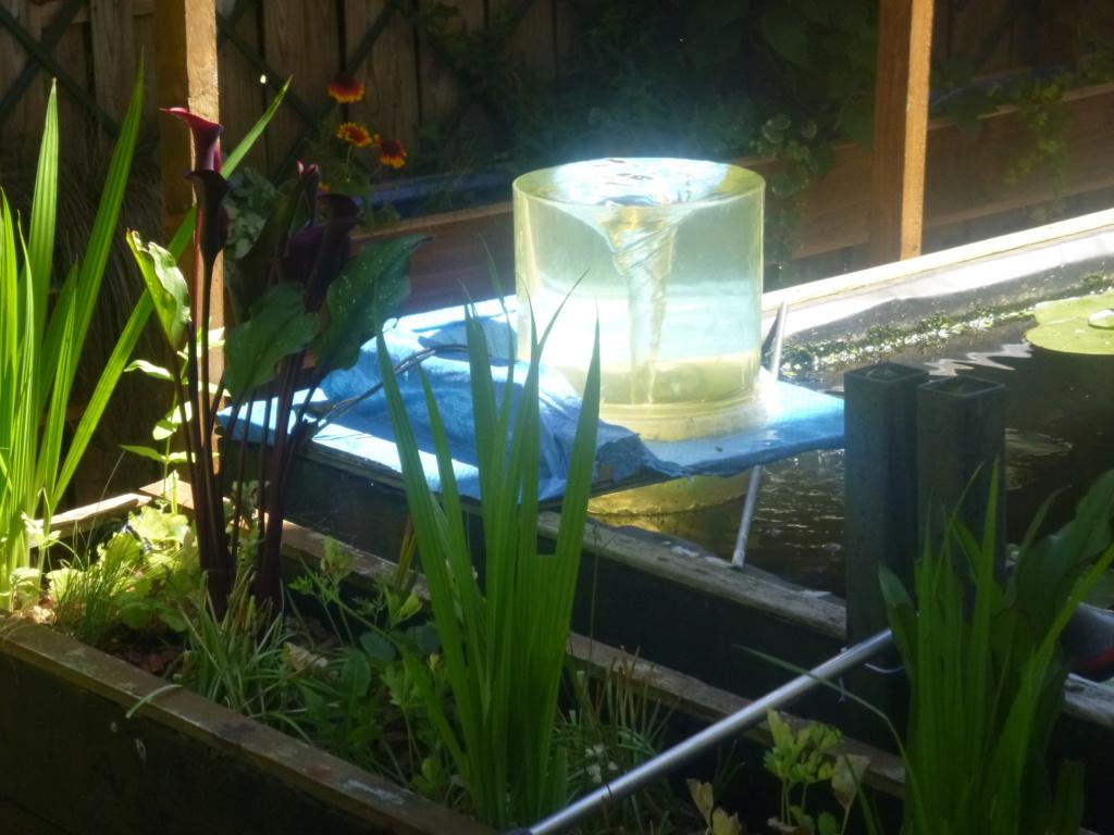 bassin de jardin 8000L - Page 42 P1000327