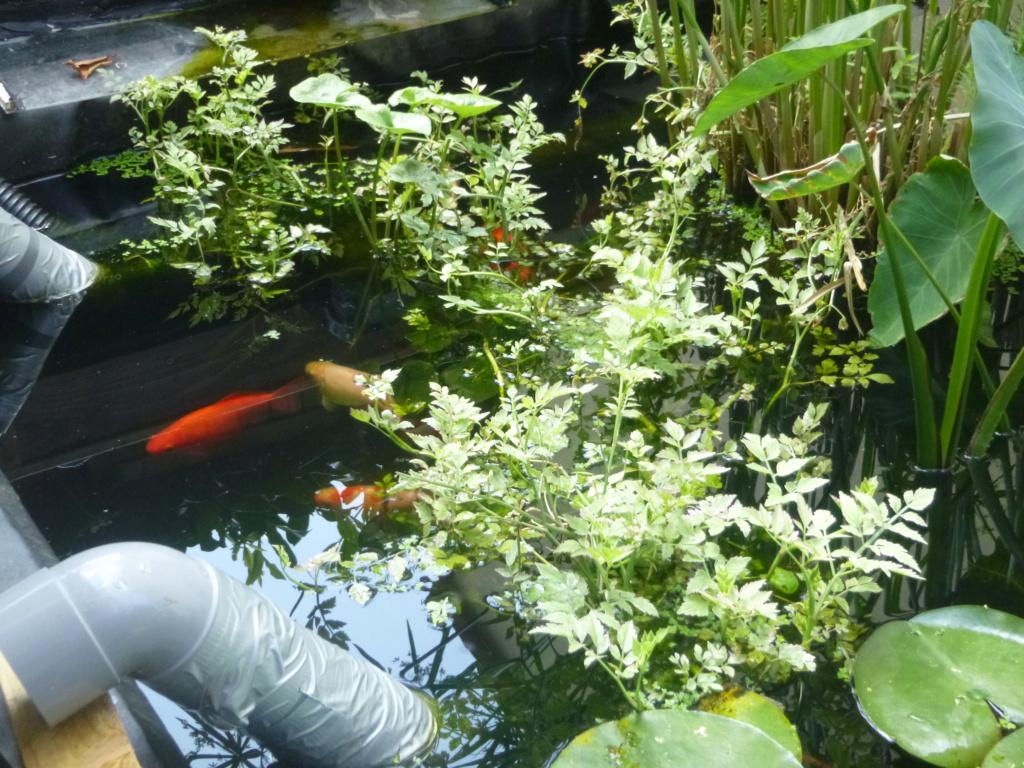 bassin de jardin 8000L - Page 42 P1000435